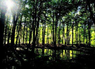 trees along Lake Lansing trail